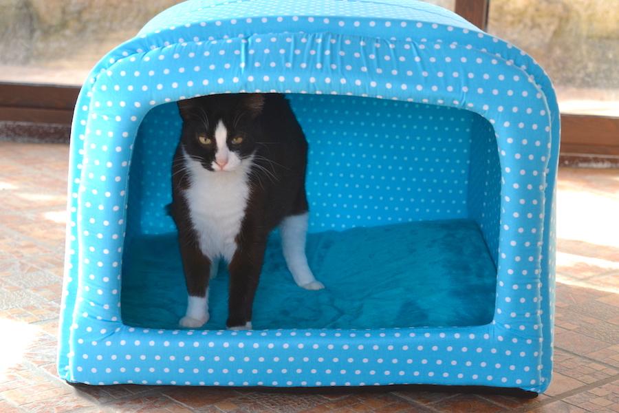 Dormire con il gatto: pro e contro